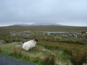 Roadside, Connemara